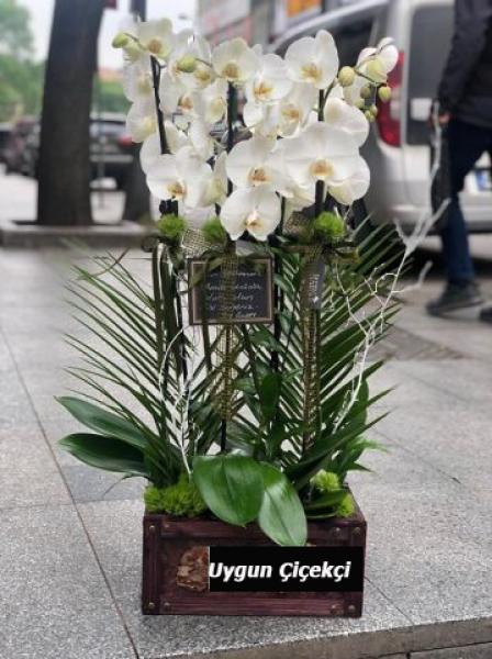 Muhteşem Orkide - 04
