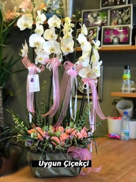 Muhteşem Orkide - 01