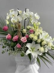 Güllü Beyaz 2 Li Orkide
