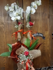 Çiftli Orkide + Gül
