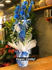 Muhteşem Orkide - 02