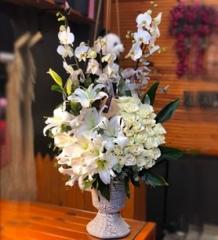 Beyazlı 4 Lü Orkide
