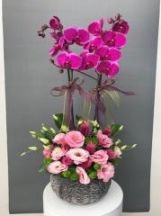 Butik Orkide