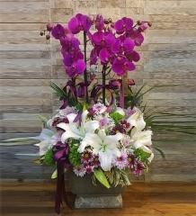 4 Köklü Mor Orkideli Lilyum