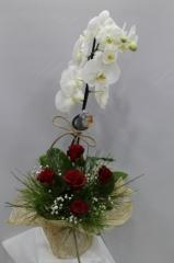 Tekli Orkideli 5 Gül