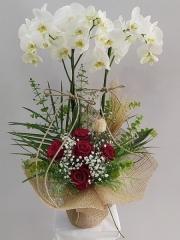 5 Güllü 2 li Orkide