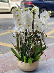 4 Dallı tasarım Orkide