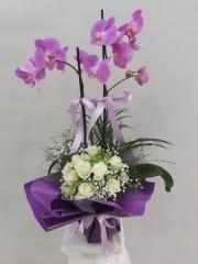 Beyaz Güllü Mor Orkide
